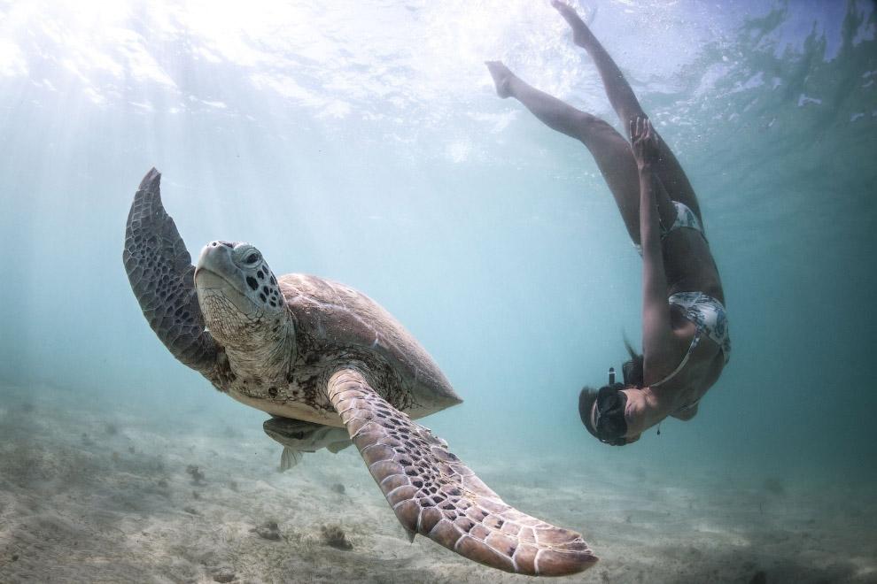 Отстаньте от меня. Заплыв с морской черепахой. (Фото Fish Eye Freediving)