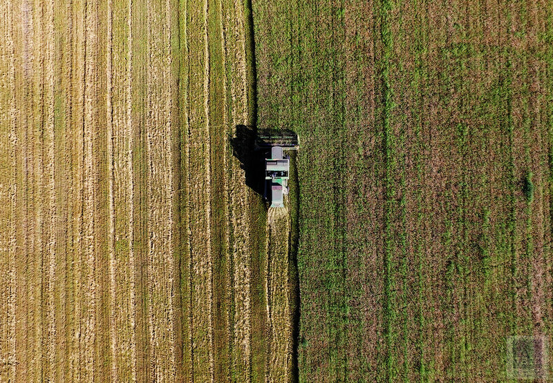 Уборка пшеницы в Приморском крае