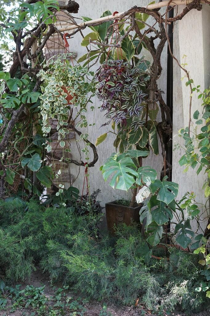 """Культурный центр """"Старый парк"""". Растительность."""