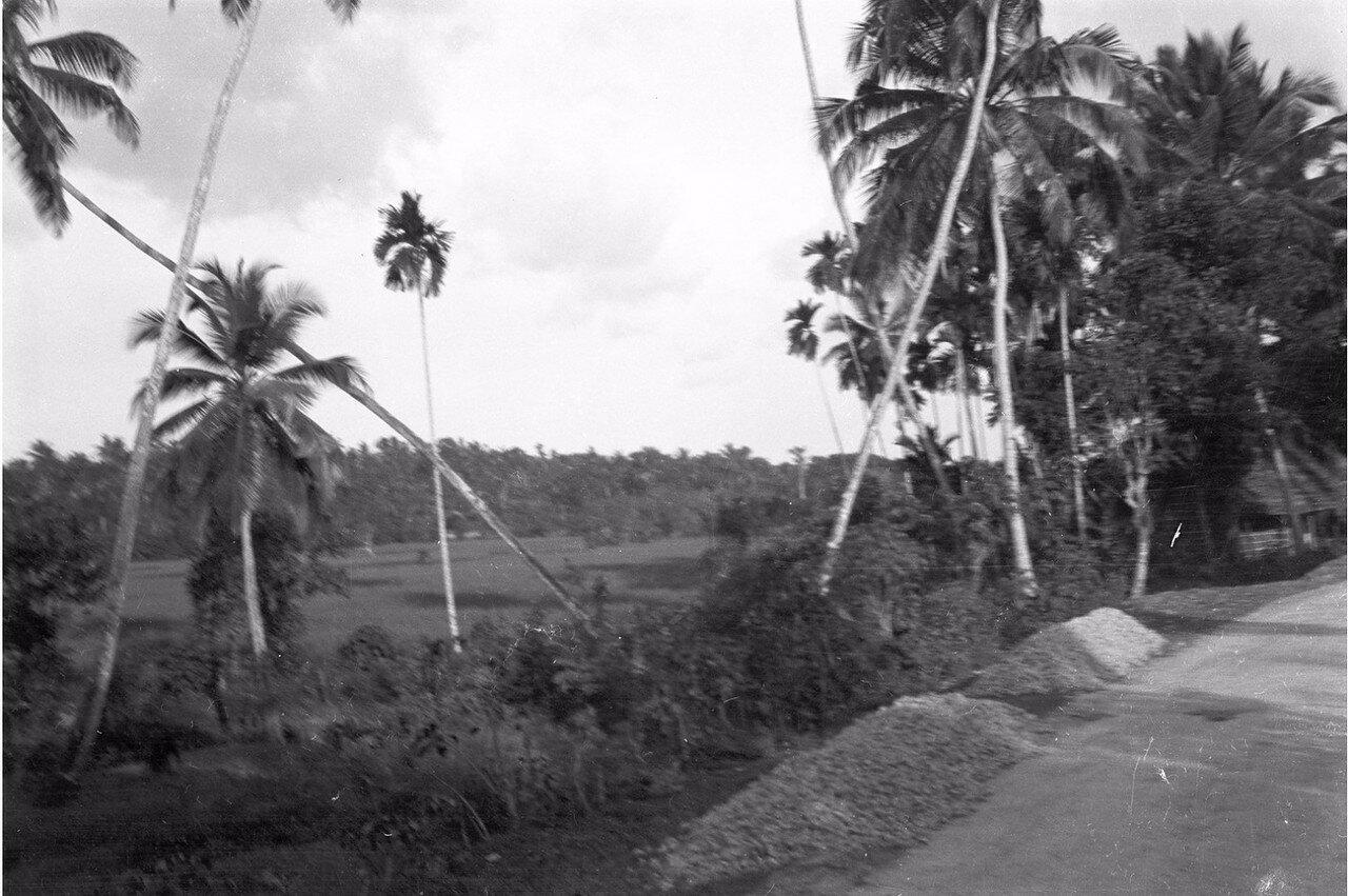 28. Дорога между Коломбо и Келанией