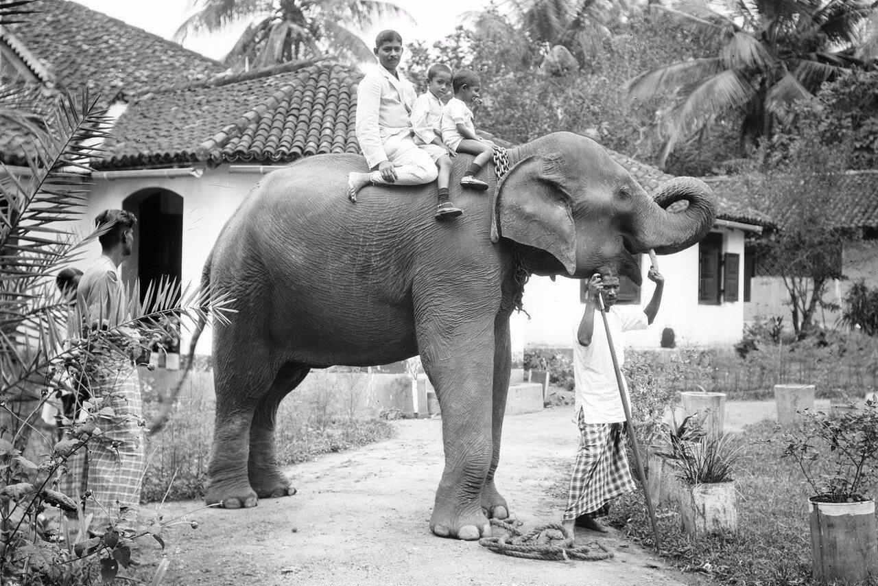 33. Чиновник из Бибилы с двумя своими сыновьями на слоне перед собственным домом