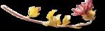 ldavi-fallingleavesautumntea-driedflower12.png