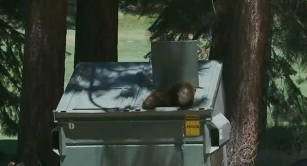 Фото: нашествие медведей на городок в штате Невада