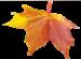 autumn (1398).png