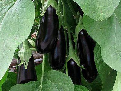 овощи в теплице