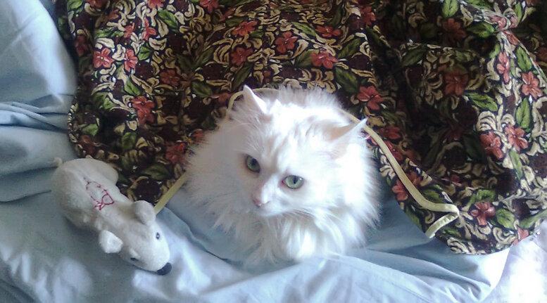 мерзлая кошка Катушка