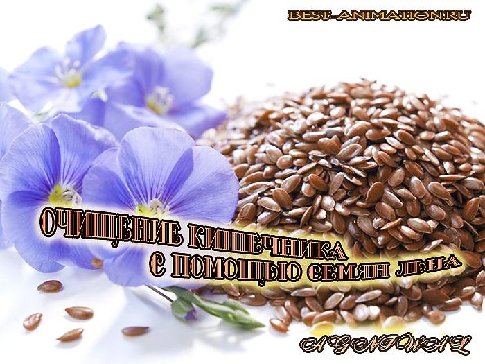 Интересные статьи - Здоровье и красота - Очищение кишечника с помощью семян льна. - BEST-ANIMATION.RU развлекательно-познаватель