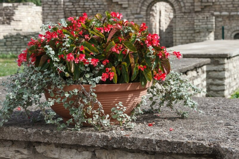 Вазон с цветами, Довмонтов город, Псков