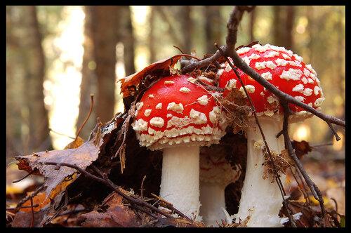 kir-govorin — «Осенне-мухоморная» на Яндекс.Фотках