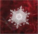 SnowFlake_10.jpg