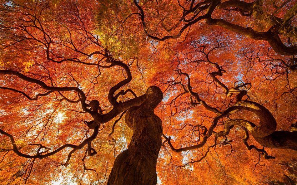 Осень картинки красивые