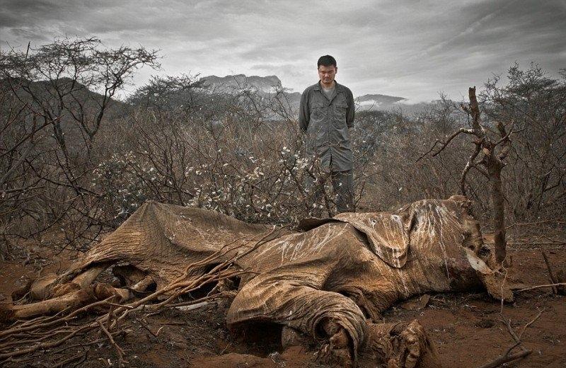 Пожар в тропическом лесу. Раньше здесь паслись козы.