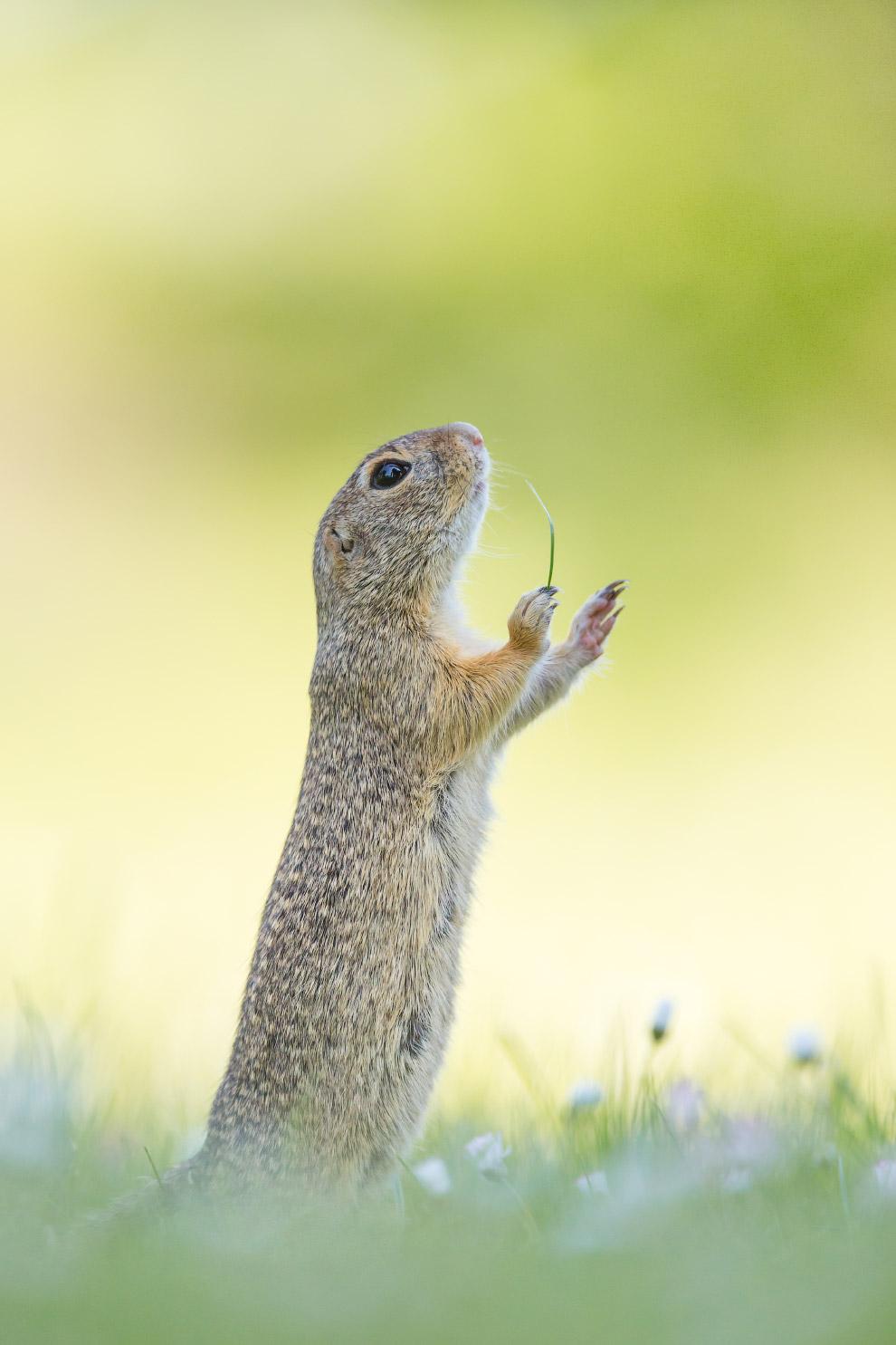 19. Пощечина. (Фото CWPA   Comedy Wildlife Photography Awards 2016):
