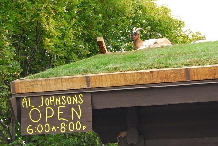 1. Идея покрытия крыш домов дерном не нова, так как издавна использовалась во многих скандинавских с
