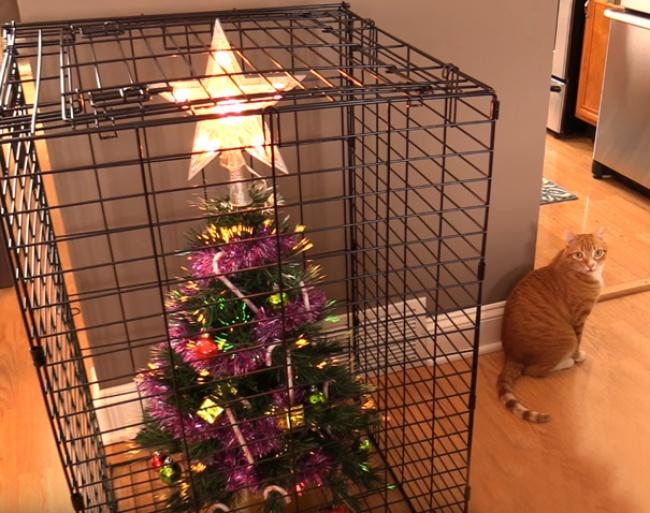© Cole and Marmalade  Единственное место для елки, когда вдоме живет лиса
