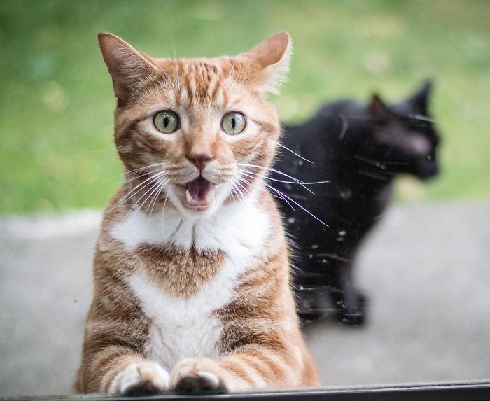 Удивленные животные