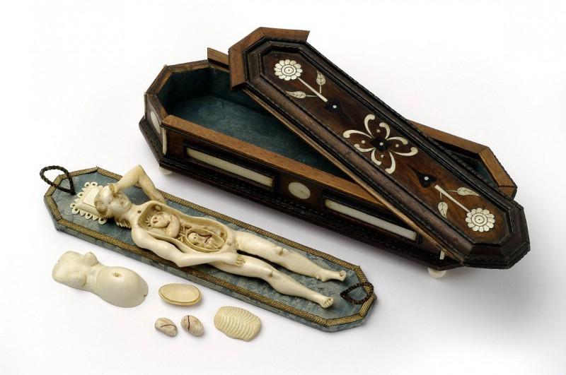 9. Анатомическая модель беременной женщины, 80-е годы 17-го века. А футляр в виде гроба служил напом