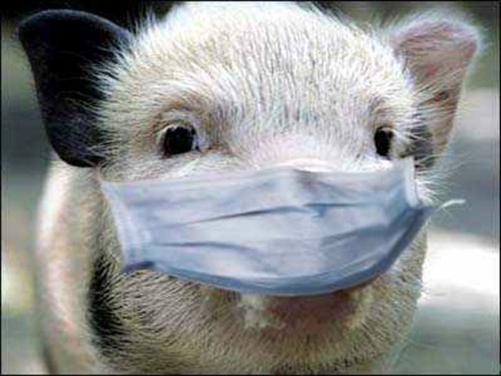 РежимЧС ввели вВеселовском районе Дона из-за чумы свиней