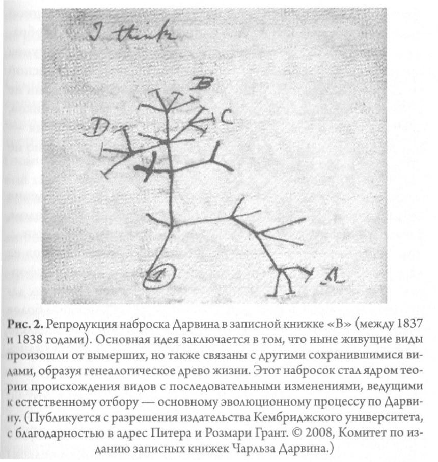 рис 4 - репродукция наброска Дарвина.jpg