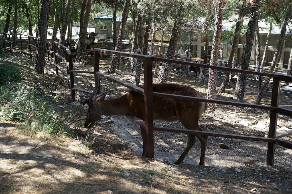 Однорогий олень в зоопарке. Сафари-парк, Геленджик.