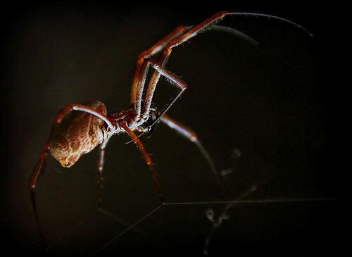 О паучках