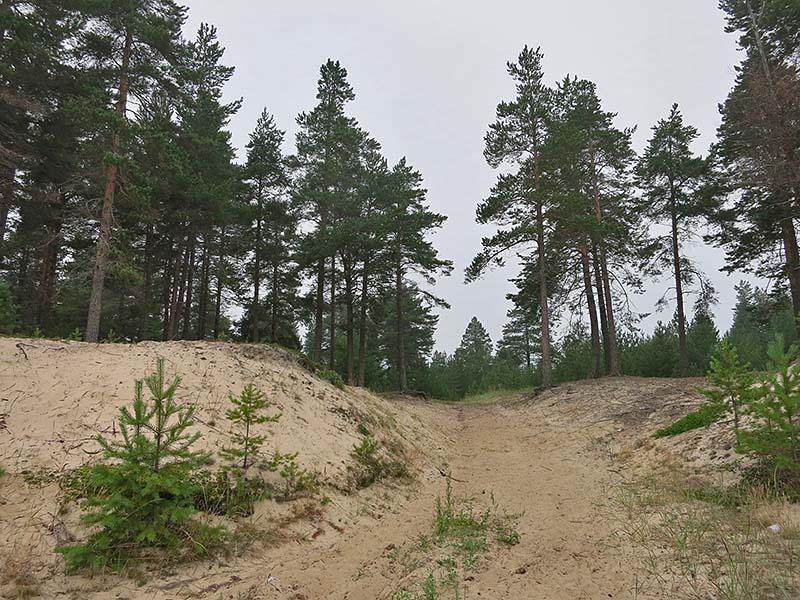 Берег озера на Чёлмужской кое