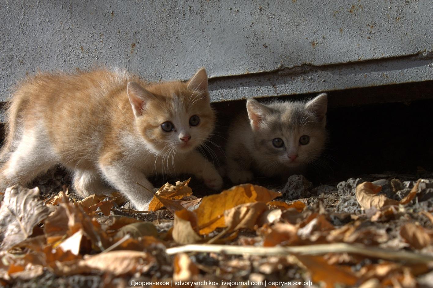 Котята на хоздворике - Парк ВГС - 20 октября 2016