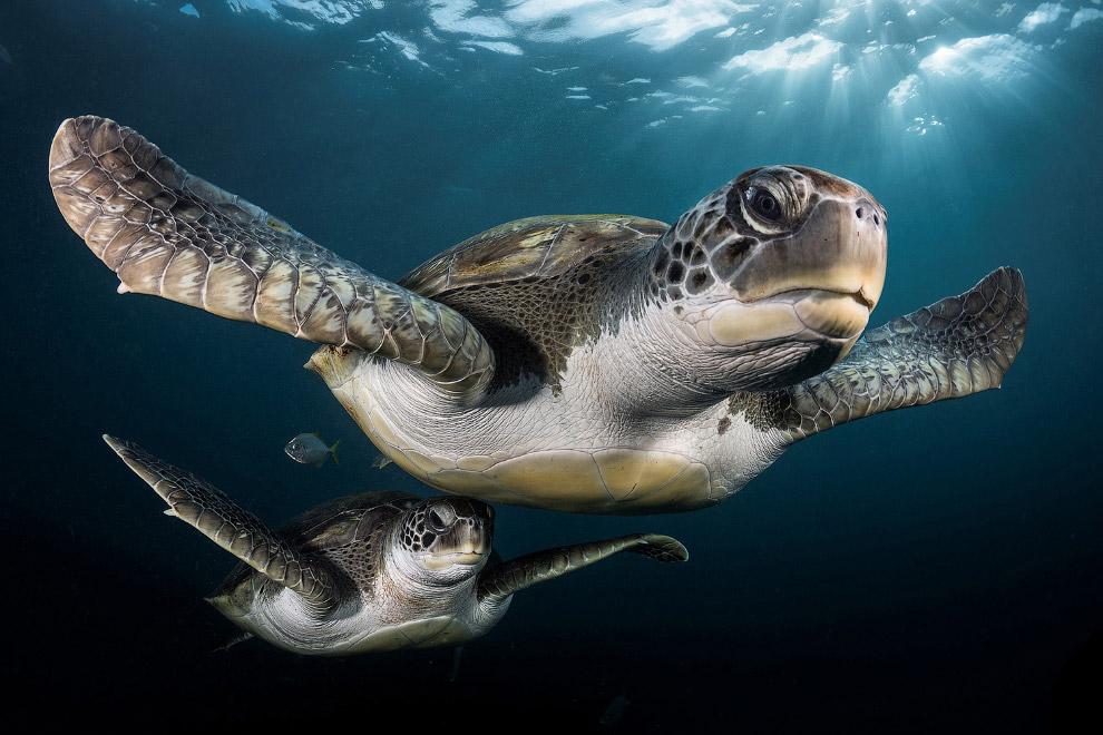 9. Морской пейзаж в категории «Съемка с широким углом». Вертолет на дне морском. (Фото Steve Jo