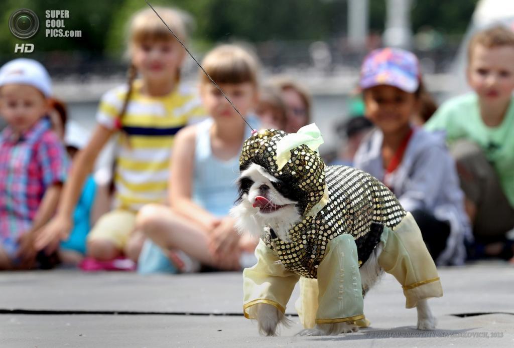 Показ мод собачьих костюмов