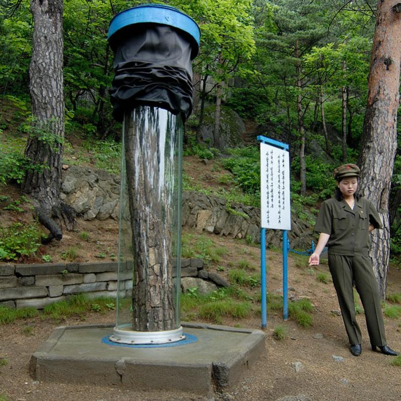 44. Экскурсия на гору. В стеклянных колбах находятся пни с письменами времен антияпонской борьбы. По