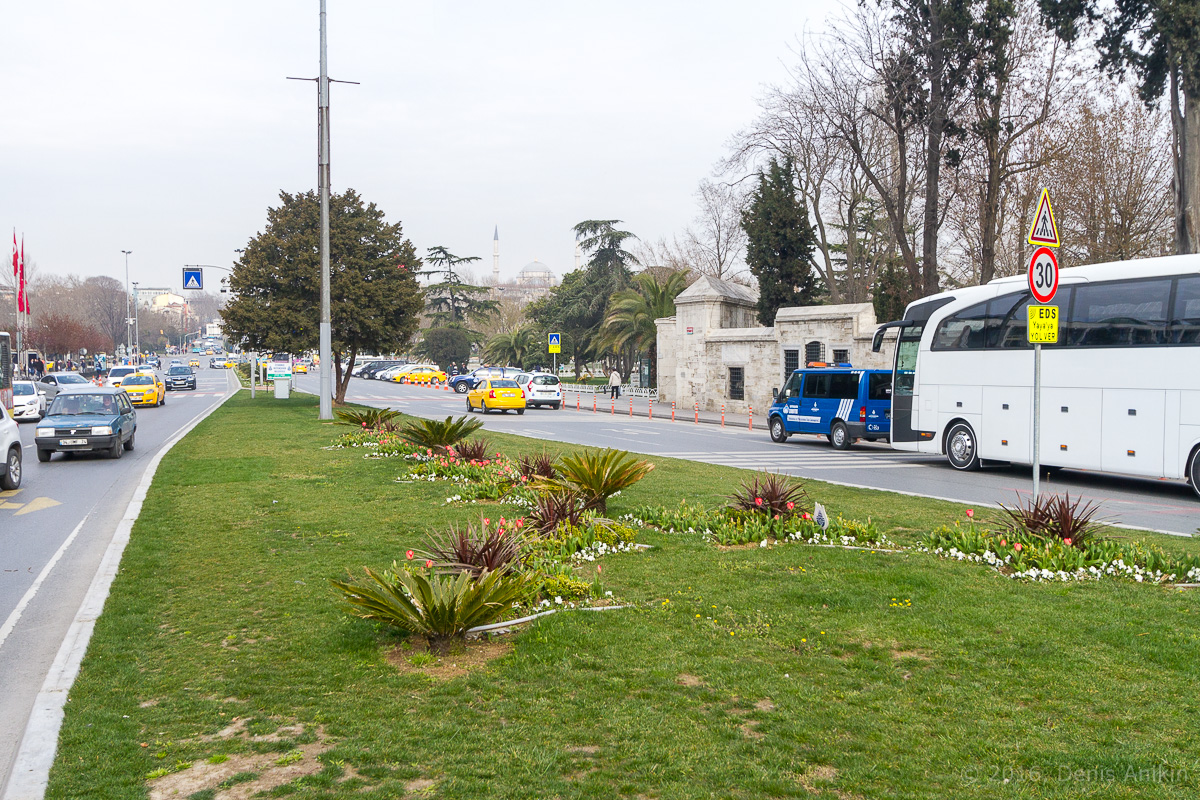 Тюльпаны Стамбул фото 7
