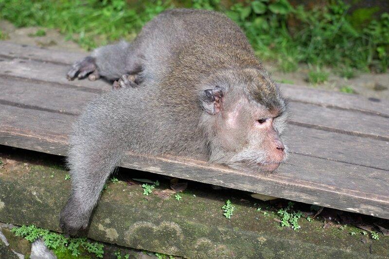 14 декабря - Международный день обезьян и не только...
