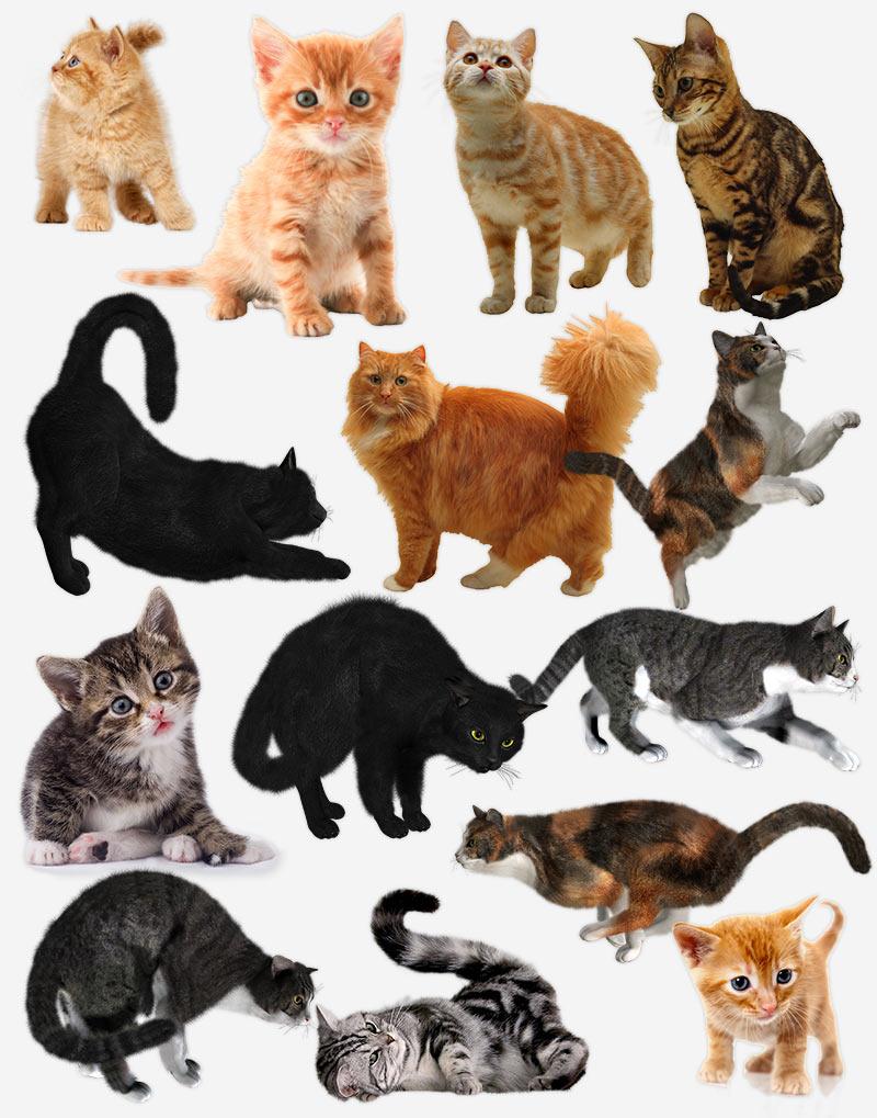 коты и котята на прозрачном фоне, PNG