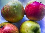 Свежие яблочки! Новый конкурс! Правила в разделе «Обсуждение клубных вопросов» Приглашаю!
