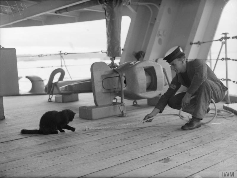Tiddles, the ship's cat of HMS VICTORIOUS, having a game with a fellow seaman during his off-duty hours.