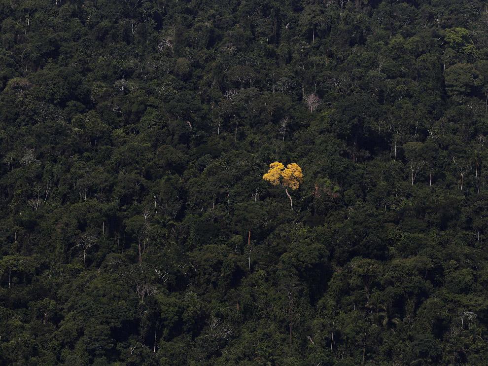 22. Коровы в районе тропических лесов Амазонки. (Фото Nacho Doce):