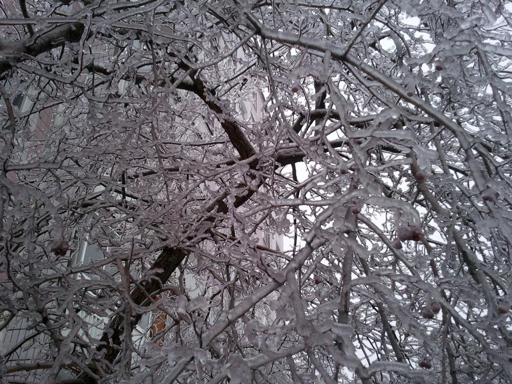 2010-12-26 13.19.01.jpg