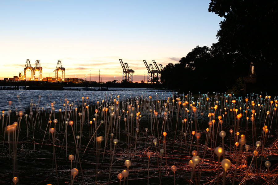 Amazing Field of Lights Installations