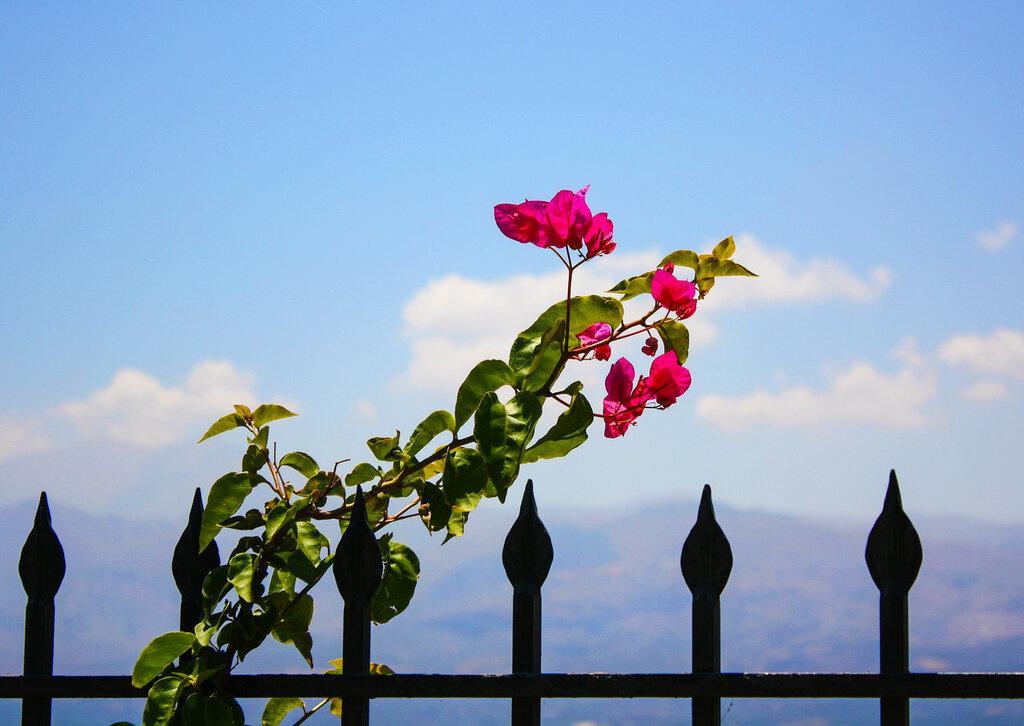 лето, Крит Бали, море,горы, природа,цветы, курорт, туризм, пляж,