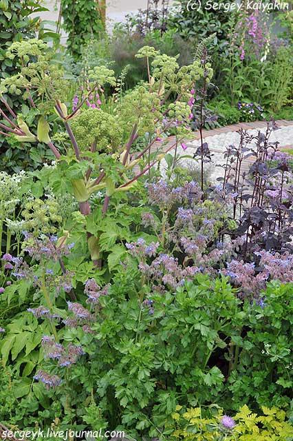 A modern Apothecary Garden (14).jpg