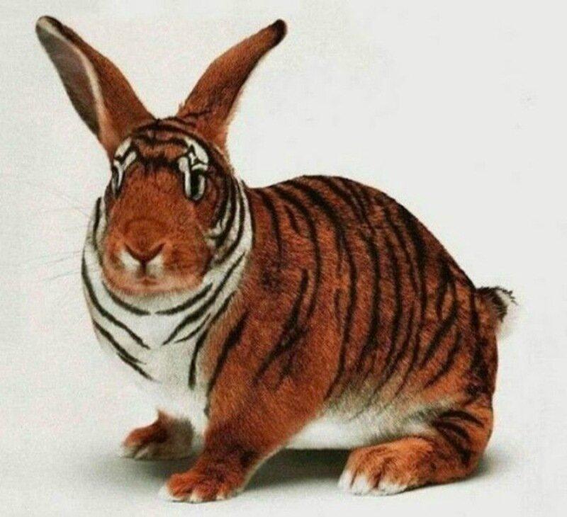 Британские ученые: портрет идеального домашнего животного