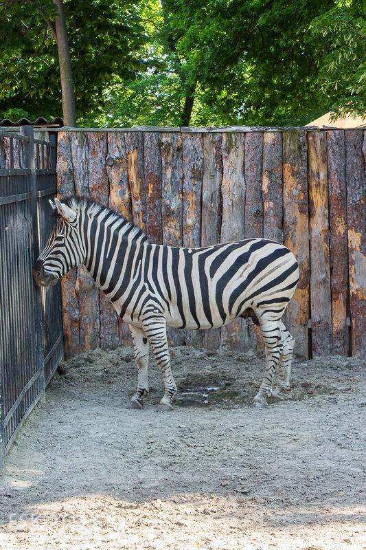 kharkiv_zoo-80.jpg