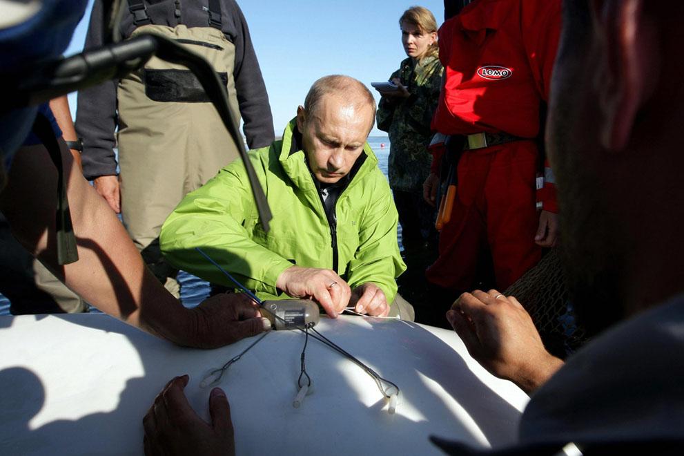 17. Путин и белуха. Президент прикрепляет маячок к белухе Даше в ходе визита на остров Чкалова в 700