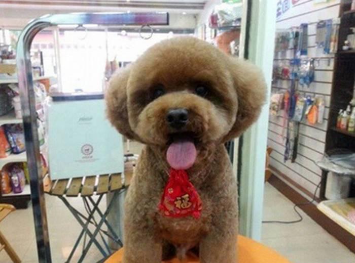 Новый модный тренд на Тайване