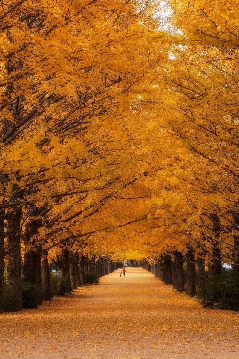 8. Япония. Парк в Акисиме. (Agustin Rafael Reyes)