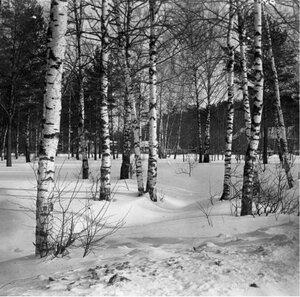 Прогулка в Петровско-Разумовское. «Березовый лес зимою около Соломенной Сторожки»