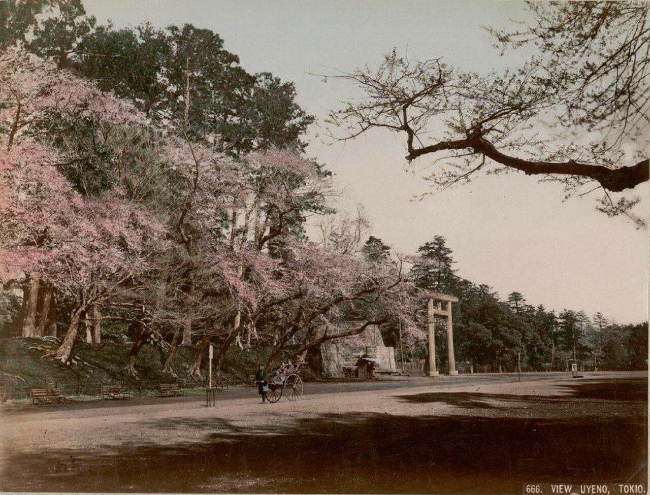 Токио. Высочайше пожалованный парк Уэно