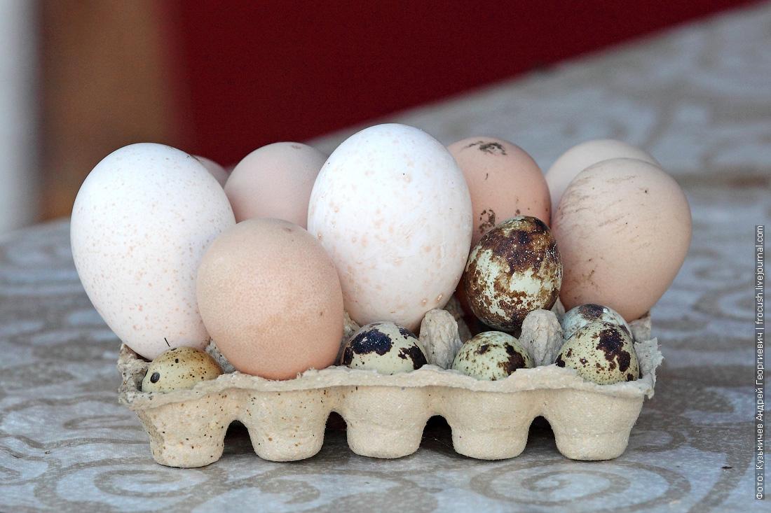 куриные яйца цесарочьи перепелиные