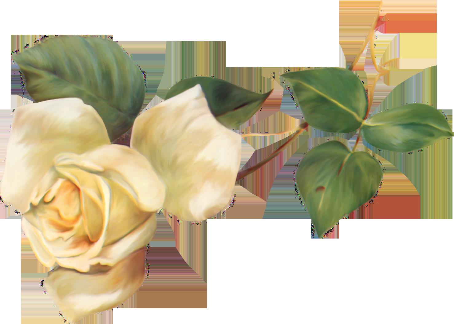 Букет роз в векторе на прозрачном фоне, антикризисные букеты купить