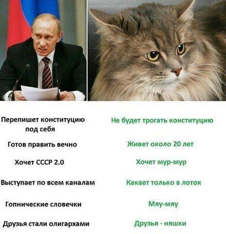 Если не Путин, то кот!